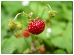 macro-fruits-altkirch-03