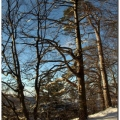 Paysage hiver 0039